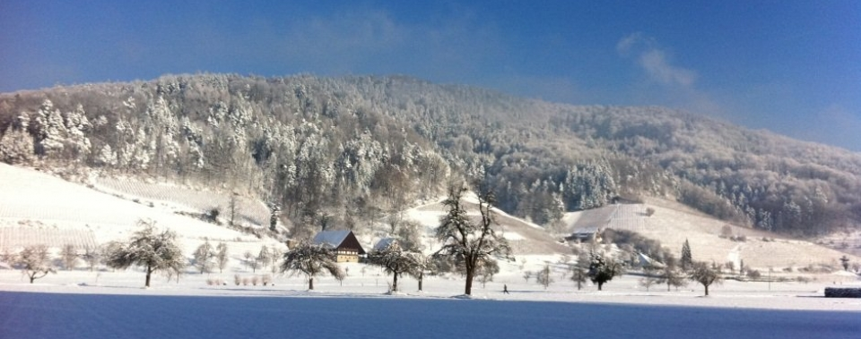 Glottertäler Weinberg im Winter