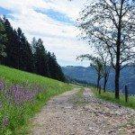 Wandern im Oberglottertal